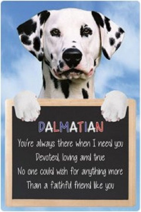 Dalmation  3D home hang up sign